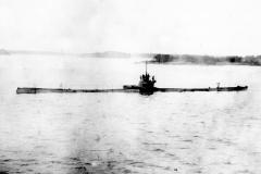 22) Акула в 1915 году