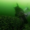 Фото 4. Акула на дне Финского залива, весна 2018 года.
